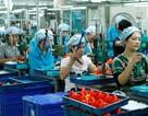 Bộ Tài chính tính giảm thuế cho 98% doanh nghiệp trong nước