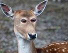 Sẽ thế nào nếu các loài động vật đều có cặp mắt ở đằng trước như con người?