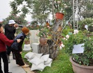 Người dân bức xúc đòi trả vé lễ hội hoa hồng ở Hà Nội