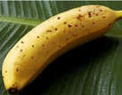 Kỳ lạ giống chuối ăn được cả... vỏ, hơn 100 nghìn đồng/quả