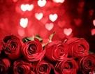 """Bộ sưu tập hình nền """"sắc hoa"""" tuyệt đẹp mừng ngày Phụ nữ Việt Nam 20/10"""