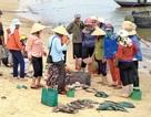 Ban hành 3 chính sách hỗ trợ người dân gặp sự cố môi trường biển miền Trung