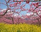 Fuefuki -  vườn địa đàng giữa lòng nước Nhật