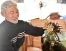 Người đàn ông lưu giữ hai bình rượu ngâm gà Đông Tảo quý hiếm