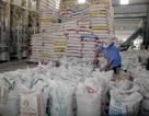 Cấp hơn 1.000 tấn gạo cứu đói người dân 3 tỉnh trong dịp Tết