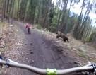 Hú vía cảnh gấu rượt đuổi người đi xe đạp qua rừng