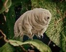 Bất ngờ về sinh vật cuối cùng sống trên Trái Đất sau mọi thảm họa