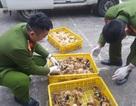 Lạng Sơn: Bắt giữ gần 7000 con gia cầm giống nhập lậu Trung Quốc