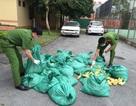 Liên tiếp bắt giữ hơn 14.000 con gia cầm giống nhập lậu Trung Quốc