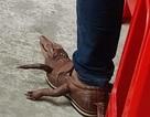 Đôi giày da cá sấu gây bão cư dân mạng có giá thật bao nhiêu?