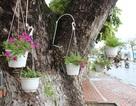 Dân Đà Nẵng treo giỏ hoa trên các tuyến đường đón APEC
