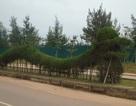 Mô hình Rồng tại Quảng Bình: Xấu vì chưa hoàn thiện