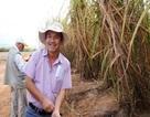 Hoàng Anh Gia Lai sẽ thu hơn 1.000 tỷ đồng từ vụ chuyển nhượng mía đường?