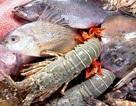 Chưa cho phép đánh bắt, khai thác và sử dụng hải sản tầng đáy 4 tỉnh miền Trung