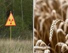 Xem xét khả năng mở lại khu vực bị ảnh hưởng bởi thảm họa Chernobyl để … trồng trọt