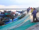 Mùa giũ cá cơm quế ở Lý Sơn