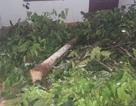 Xử phạt giám đốc công ty xây dựng chặt cây xanh để lấy mặt bằng