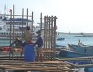 Quảng Ngãi: Ngư dân vay hàng trăm triệu đồng phát triển thủy sản sau bão