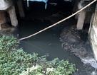 """""""Tối hậu thư"""" cho trạm xử lý nước thải 42 tỷ đồng gây ô nhiễm"""