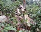 Bắt nguyên cán bộ công an tỉnh bảo kê phá rừng