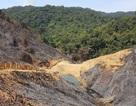 Phát hiện hàng chục hecta rừng bị phá trắng, đốt trụi