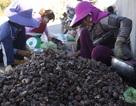 Thành lập khu bảo tồn biển Lý Sơn: 700 ngư dân cần sinh kế mới