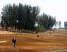 Vụ phá rừng làm sân golf: Doanh nghiệp xin triển khai tiếp một số hạng mục