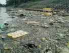 Hà Nội: Hồ Đền Lừ tràn ngập rác thải và xác cá