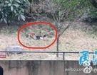 Hổ dữ cắn chết du khách trong vườn thú ở Trung Quốc