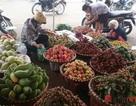Mỗi ngày, Việt Nam chi gần 60 tỷ đồng nhập rau quả từ Trung Quốc, Thái Lan