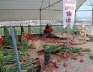 """Lào Cai: Nhiều loại hoa Tết tiền triệu """"đại hạ giá"""" vẫn ế dài"""