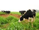 Nông nghiệp hữu cơ: Từ cánh đồng Châu Âu nhìn về cánh đồng Việt