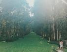 Thám hiểm 5 con đường xuyên rừng tràm đẹp ngỡ ngàng ở miền Tây