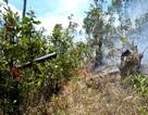 Đám cháy kéo dài hơn 6 giờ thiêu rụi 20 ha rừng