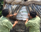 """Hơn 50 tấn đường """"mập mờ"""" nguồn gốc, ngụy trang trong kho phế liệu"""