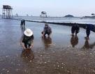 Vụ đổ chất thải xuống biển: Mẫu nước thải vượt quy chuẩn cho phép