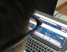 """Thu thuế kinh doanh online: """"Săn"""" tài khoản có doanh thu... cá mập"""