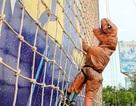 Độc đáo hình ảnh khủng long chinh phục Bức tường Tiger