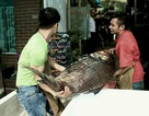 """Choáng với cặp cá hô """"khổng lồ"""" giá hàng trăm triệu ở Hà Nội"""