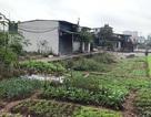 """Hà Nội: Đua nhau xây nhà trên khoảng ruộng """"kẹt"""" giữa nội thành"""
