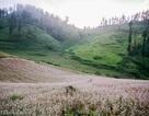 Tận mắt cánh đồng hoa tam giác mạch tuyệt đẹp ở rẻo cao Tây Bắc