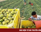 Từ bỏ áp lực công việc, nhiều lãnh đạo đi làm nông dân ở Israel