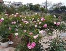 Chiêm ngưỡng những khu vườn tiền tỷ của dân chơi Hà thành