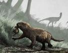 Các loài động vật có vú từng phần lớn là sinh vật ban đêm