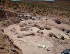 """Loài khủng long mới được phát hiện là """"sinh vật lớn nhất từng đi lại trên Trái Đất"""""""
