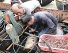 Nhọc nhằn nghề săn tôm hùm giống tại Quảng Trị