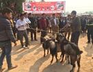 Độc đáo Lễ hội văn hóa các dân tộc huyện Yên Thế tỉnh Bắc Giang