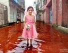 """Giật mình nhìn """"dòng sông nhuộm máu"""" trên phố"""