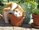 Trắc nghiệm vui: Bạn có hiểu rõ về loài mèo?
