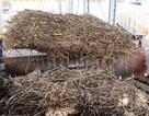 Gần 500 ha mía bị đốt trụi, hàng chục tỷ đồng ra tro